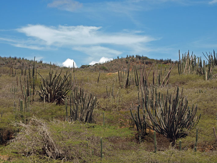 Aruba-Arikok-National-Park