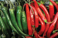 Mexico-Chili-Pepper-Domestication