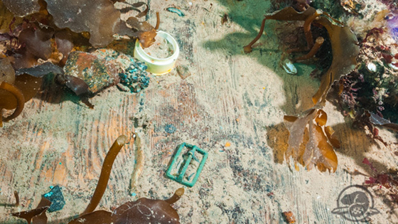 So far archaeologists have focused on assessing the state of the wreck, cleaning off kelp, and retrieving certain artifacts that are clearly exposed. This view of the lower deck of Erebus, near the sailor's quarters, shows several objects that have been raised, including a belt buckle, a white ceramic ointment pot, and a concretion of percussion caps (adjacent to the pot). Ceramic pots like this one could have held shaving cream, shoe polish, or condiments—lab tests of the clay-like substance inside may reveal what this one contained. (Parks Canada)