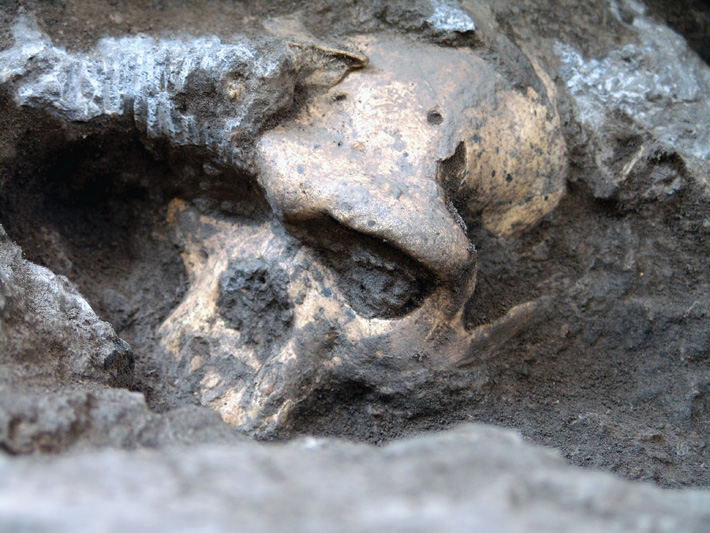 Homo erectus Stands Alone - Archaeology Magazine