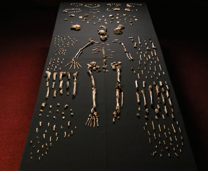 Top Ten Homo Naledi