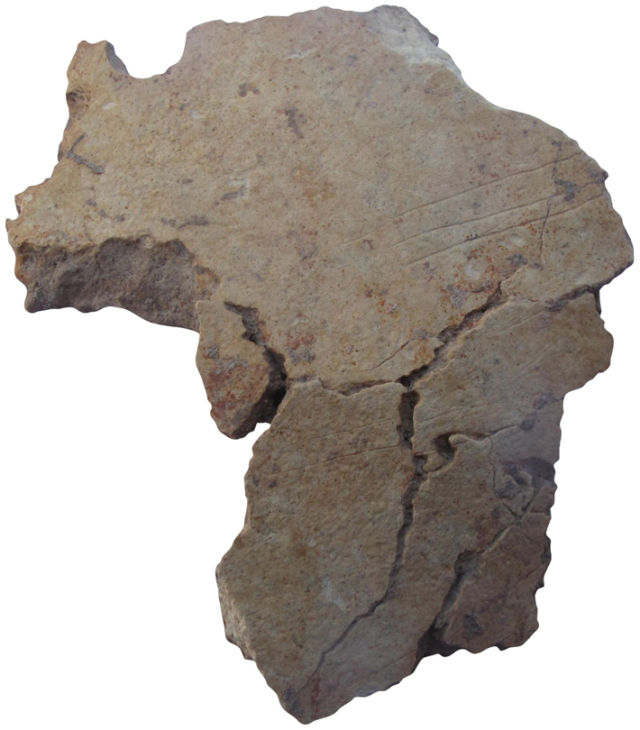 Top Ten Turkey Skull Fragment