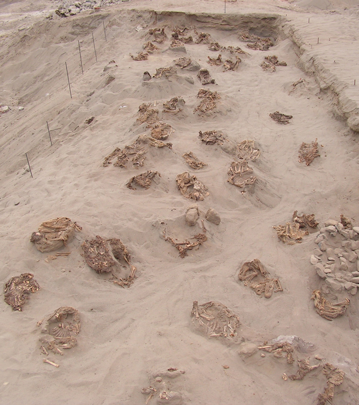 On Yıl Peru Lama Kurbanı