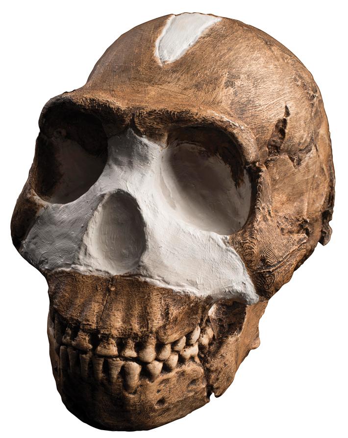 On Yıl Güney Afrika Homo Naledi