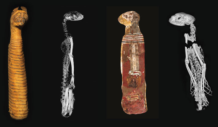 Animal Mummies Cats Xrays