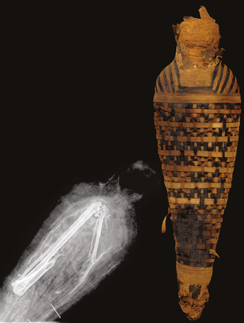 Egypt Animal Mummies Hawk