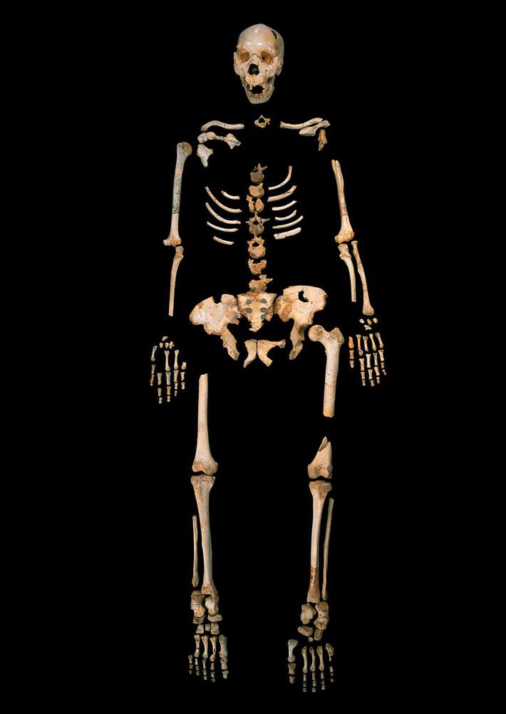 Homo heidelbergensis skeleton