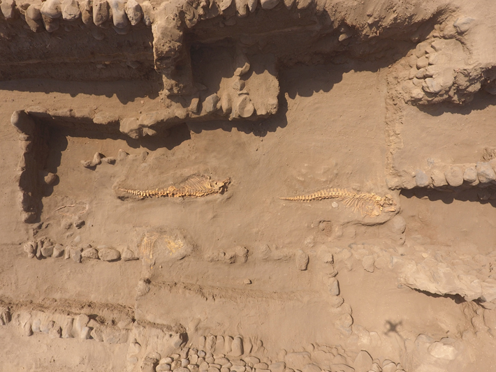 Surprising Finds Beneath a Peruvian Temple - Archaeology Magazine