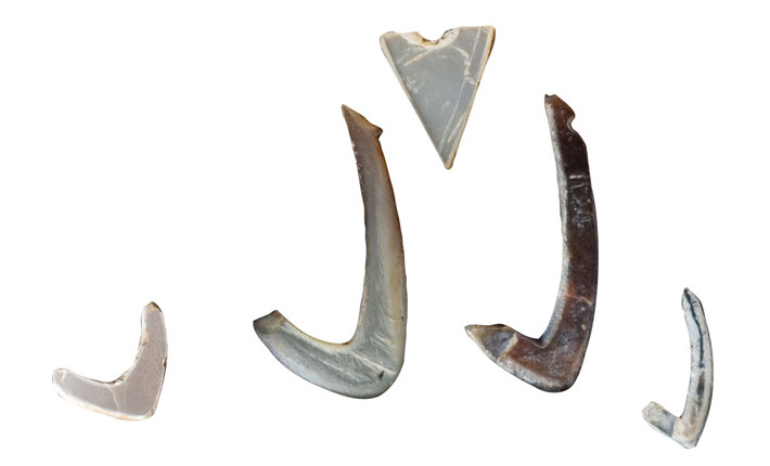 Hawaii Cave Shell Fishhooks