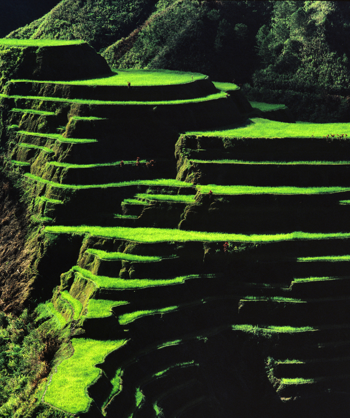 Philippines Ifugao Terraces Closeup