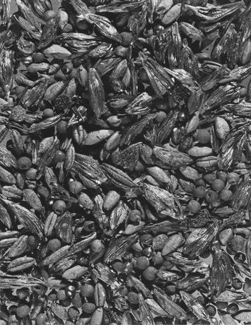 Hitit Tahıl Tohumlarını Vergilendirir