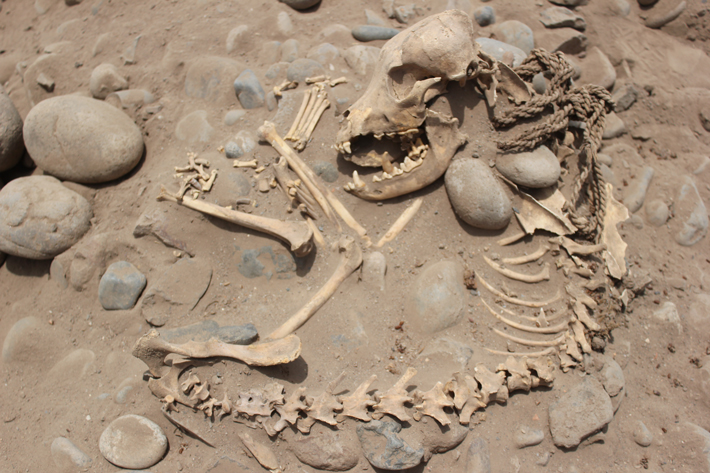 Trenches Peru Dog Burial