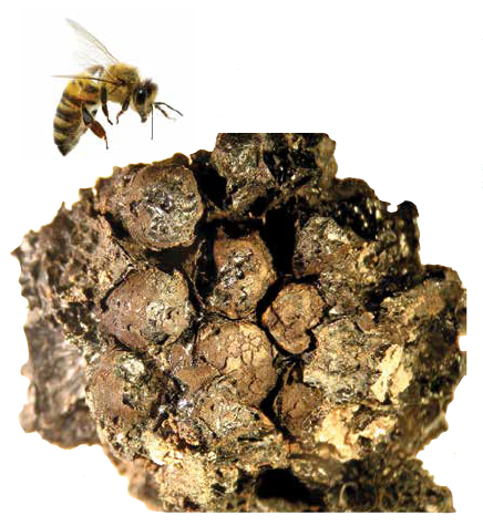 Trenches Etruscan Ancient Honeycomb Bee