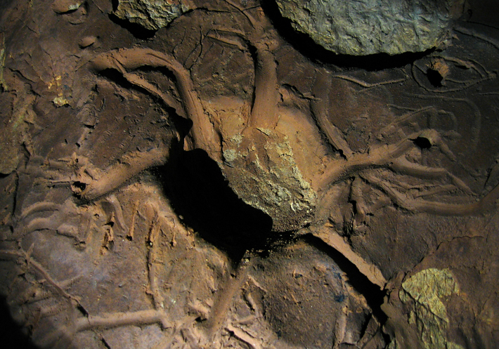 An elaborately incised mud glyph discovered in Unnamed Cave 36 may depict a turtle.
