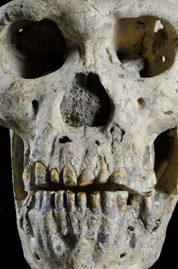 Was Homo erectus More Like Baboons Than Chimps?
