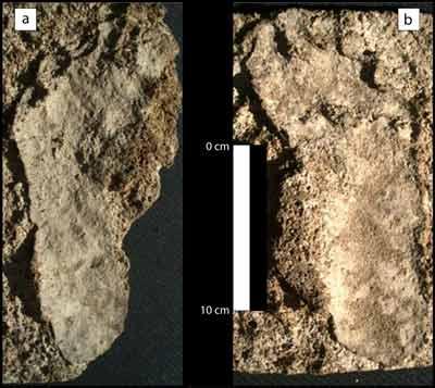 North America's Oldest Human Footprints Mexico-footprints-travertine