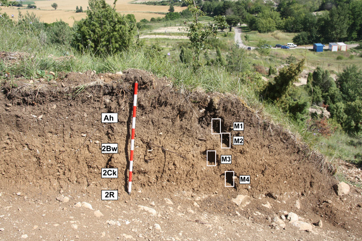 Ancient Vineyards Found in Basque Country