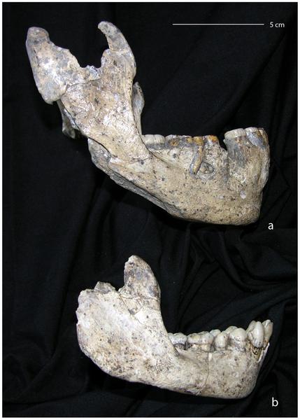 How Many Homo Species Lived at Dmanisi? Georgia-dmanisi-homo