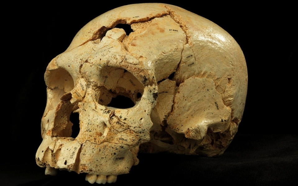 The Evolution of Neanderthals Atapuerca-Neanderthal-Skull