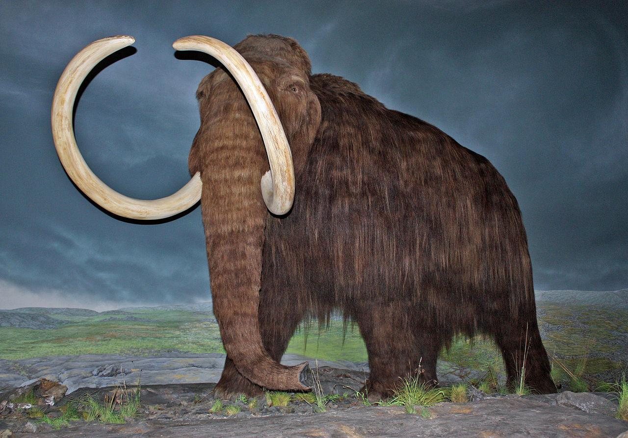 Wooly-Mammoth-Megafauna-Hunters