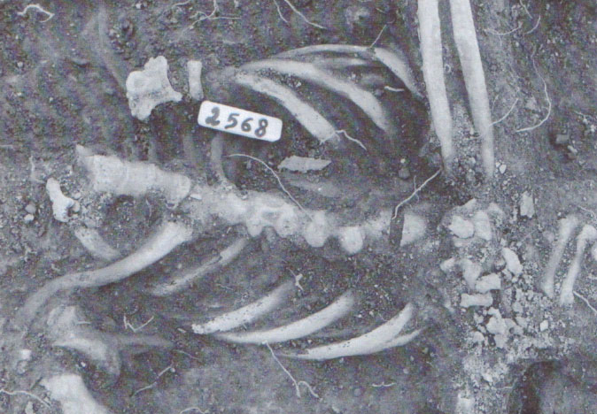 Medieval-Skeleton-DNA