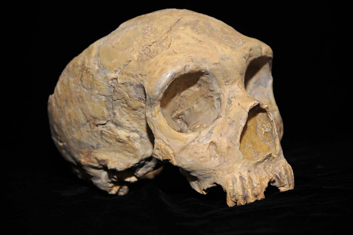 Neanderthal skull from Forbes Quarry