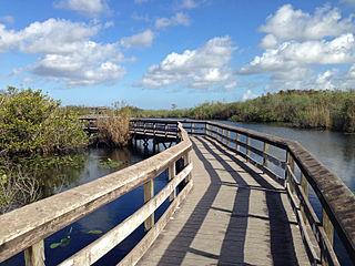 Archaeologists Survey Everglades Site