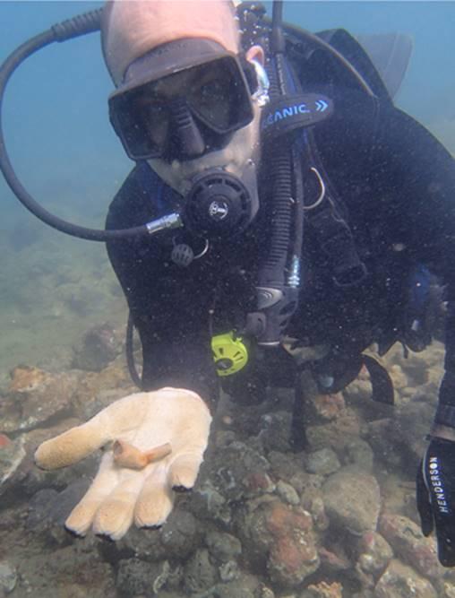 Tobago-Shipwreck