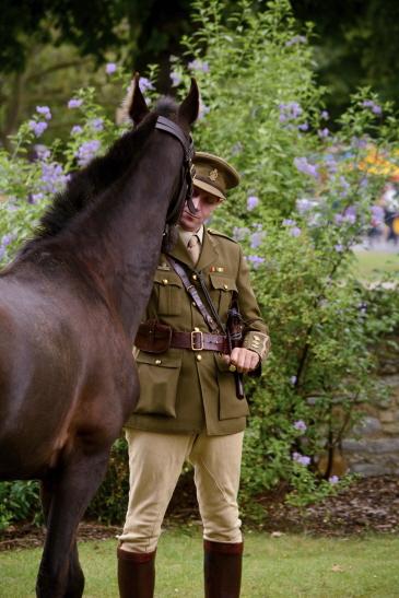 world war I horse article