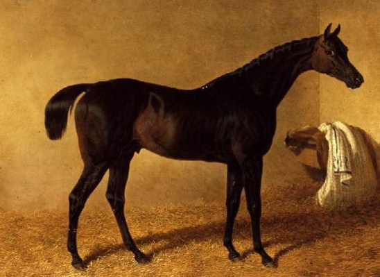 Skeletal Remains May Be Famed English Racehorse