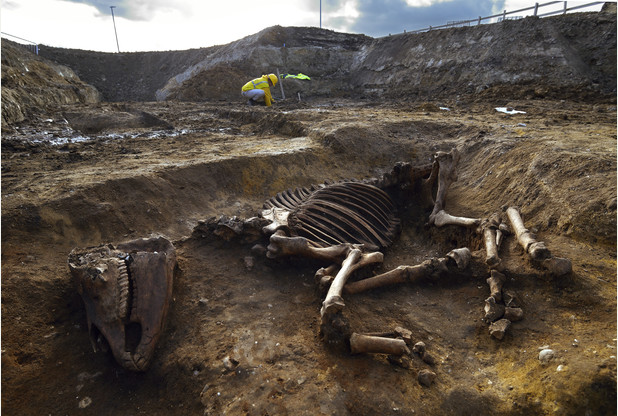 Intact Horse's Skeleton Found at Roman Site