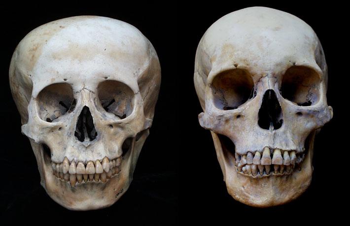 Peru-Skull-Study