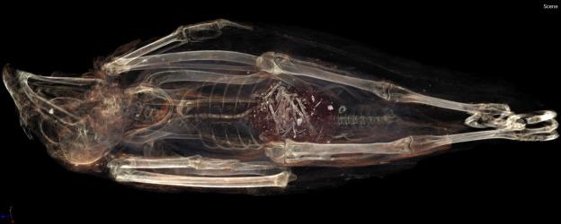 egypt mummy kestrel