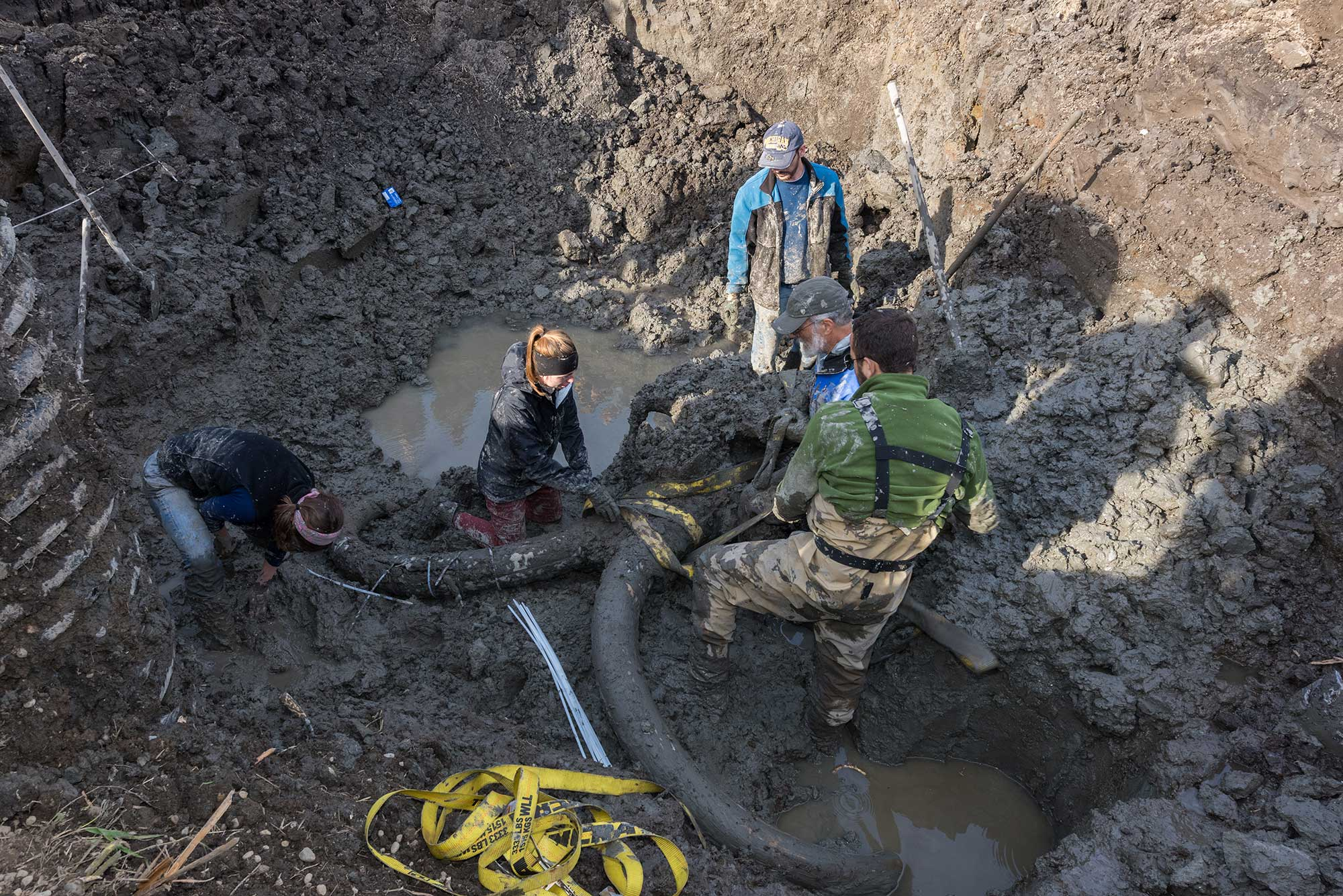 Butchered Mammoth Bones Unearthed in Michigan