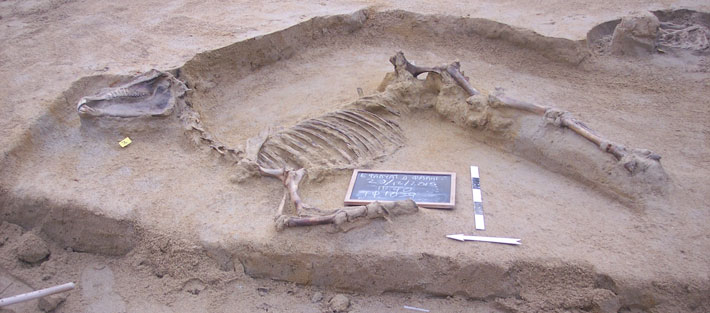 Neolithic Horse Burial