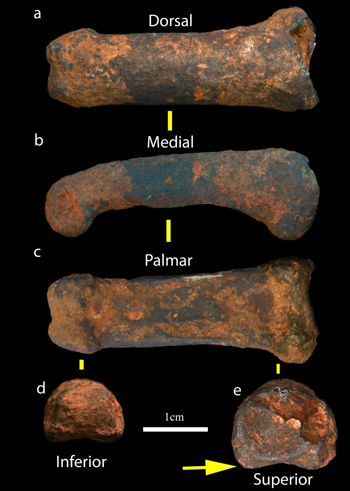Sterkfontein Caves fossils