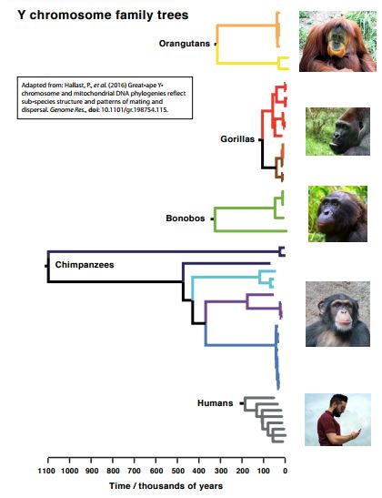 apes family trees2