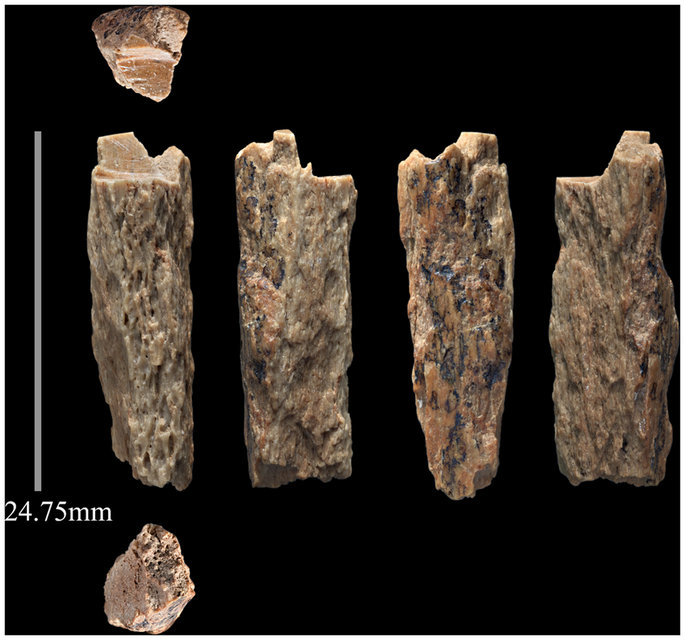New Neanderthal Bone