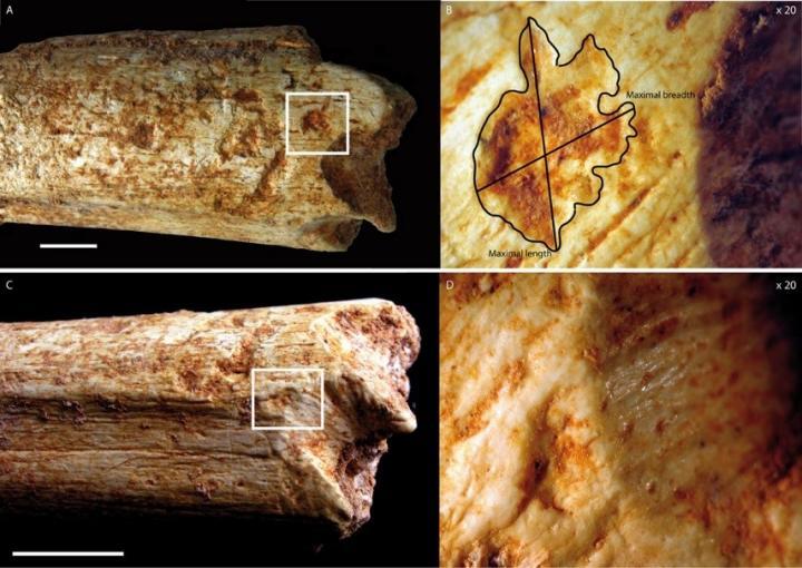 Morocco cave femur