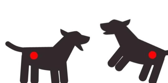 canine cancer routes