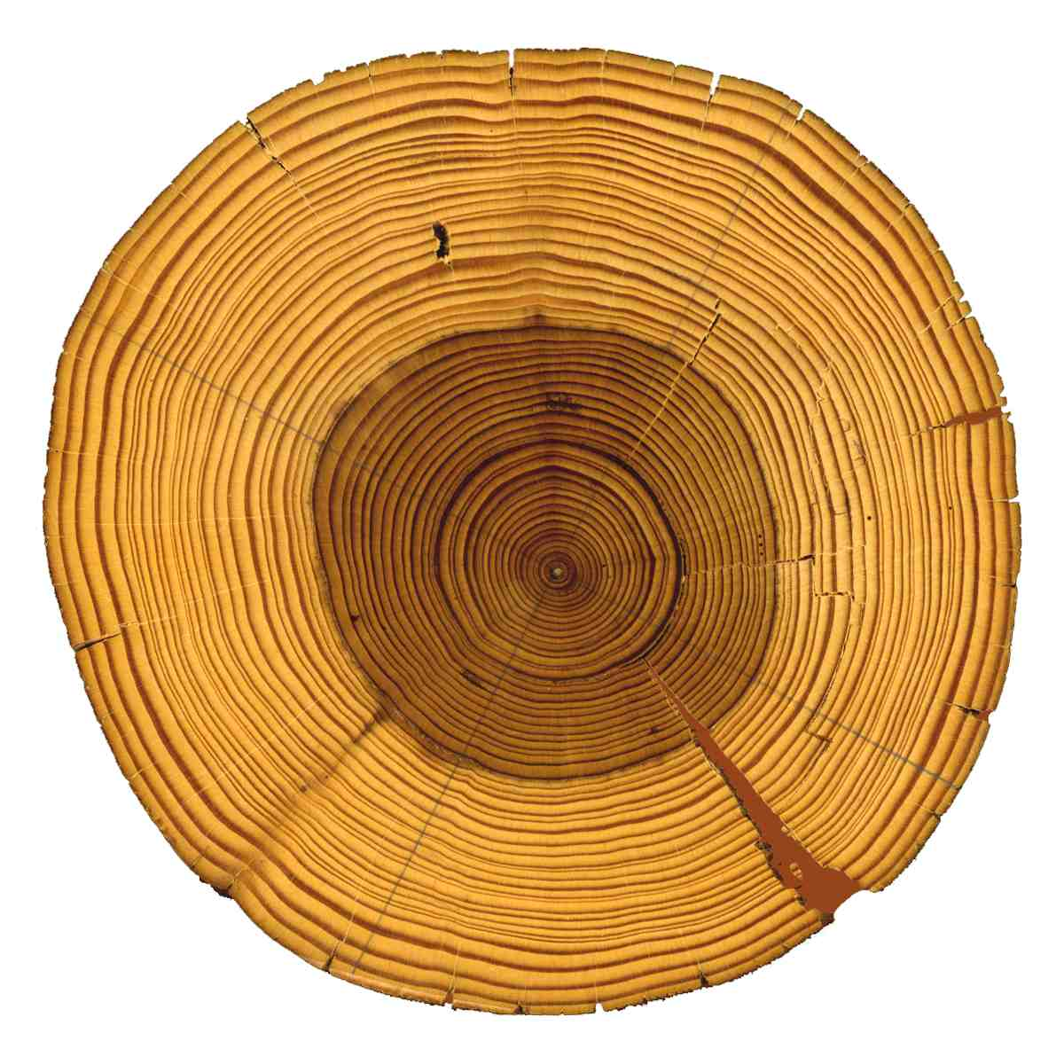 Tree ring dating and archaeology