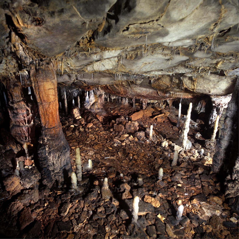 cave lion extinction