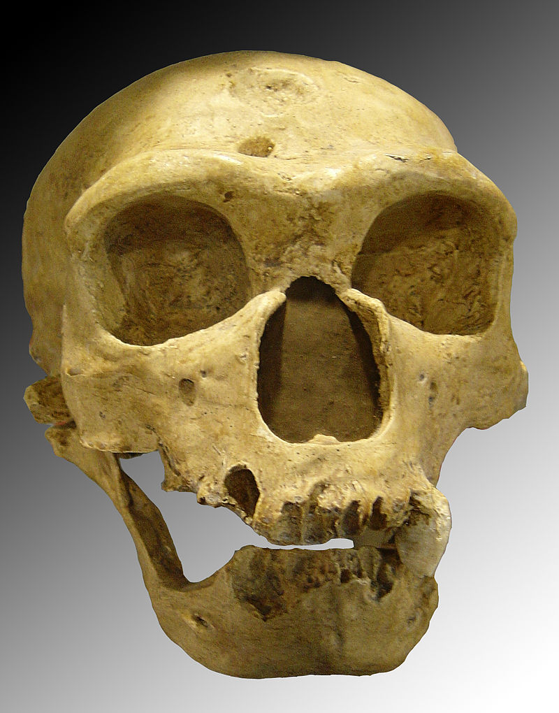 Neanderthal Genes Control Expression