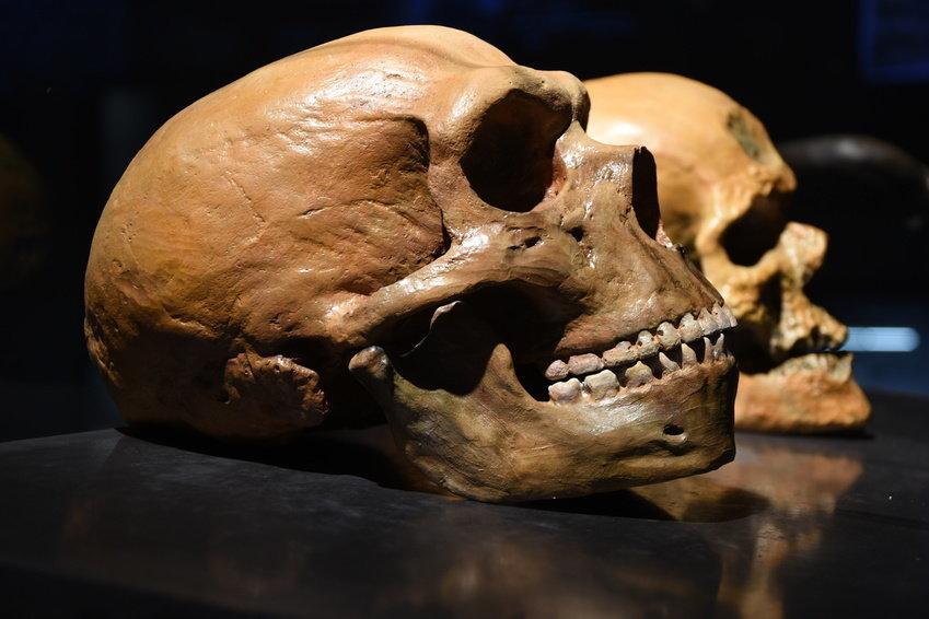 Study Tracks Neanderthal Traits in Modern Humans