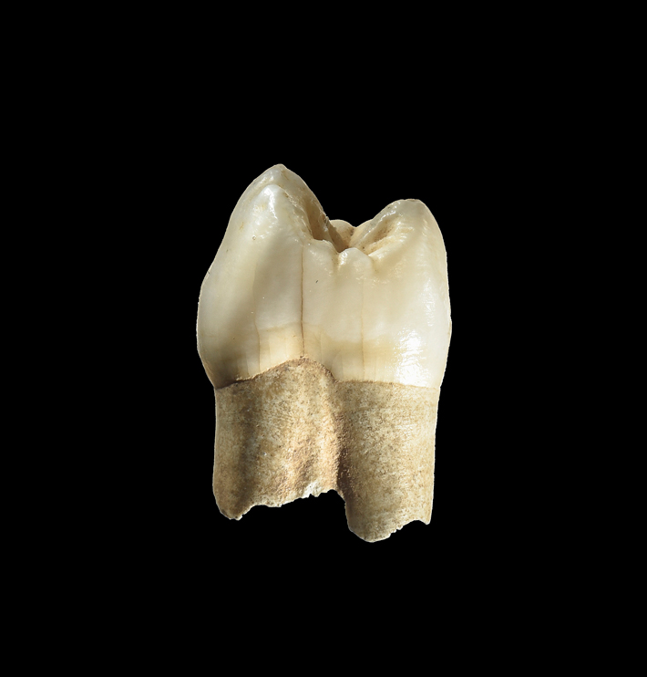 Iran Neanderthal Tooth