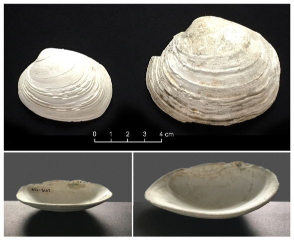 Study Shows Shellfish Thrived in Canada's Ancient Clam Gardens