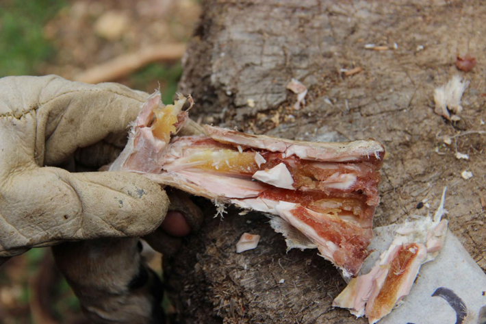 Hominins May Have Stored Food 400,000 Years Ago - Archaeology Magazine
