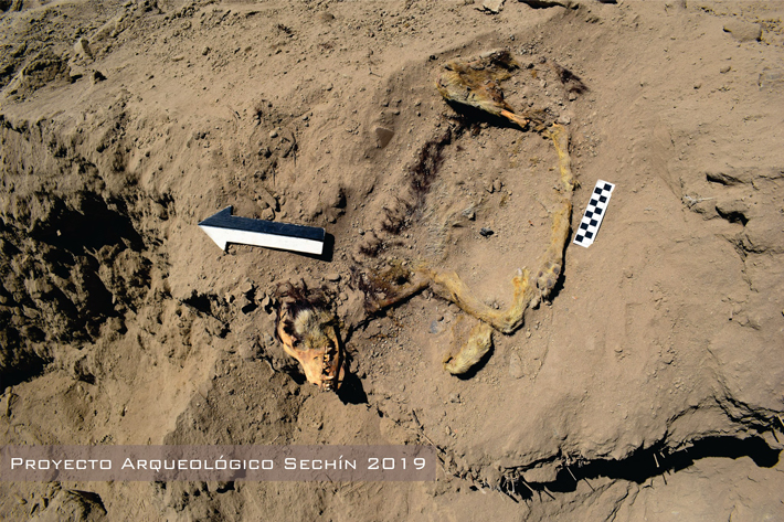 Well-Preserved Dog Remains Unearthed in Peru - Archaeology Magazine