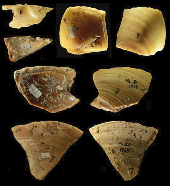 Neanderthal Shell Tools Studied - Archaeology Magazine