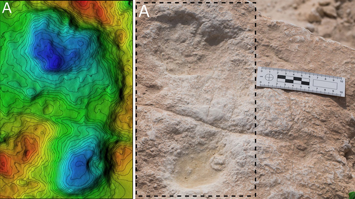 120,000-Year-Old Hominin Footprints Found in Saudi Arabia - Archaeology Magazine